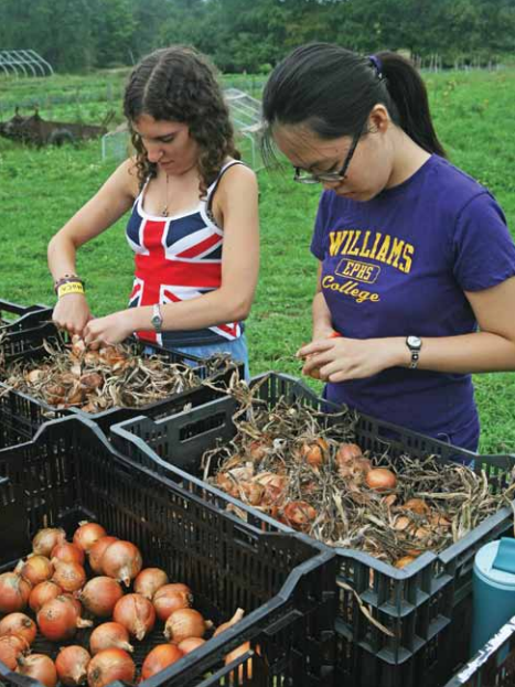 First-year students Becky Tseytkin (left) and Wei Li help clean onions at Square Roots Farm as part of their service project for the Where Am I?! EphVentures program during orientation.