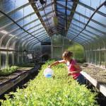 Students help keep Berkshire farming