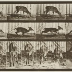 Eadweard Muybridge at WCMA