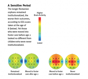 Sensitive Period Chart