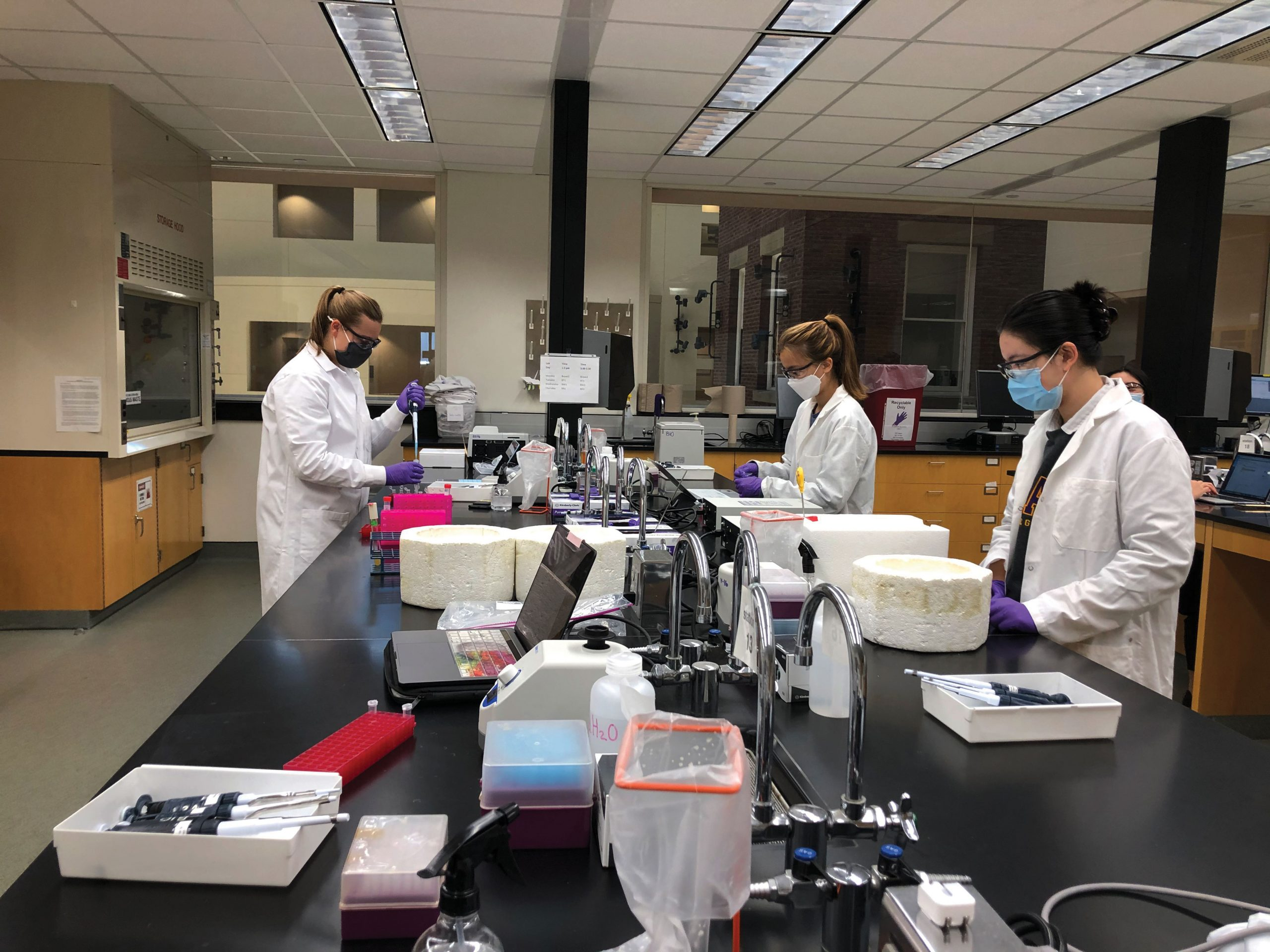 Students conduct lab work for Biology 101: The Cell in the fall. (Photo provided by instructor Janis Bravo.)